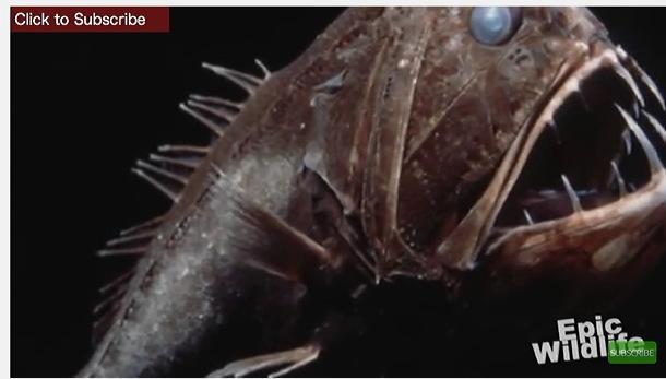 深海魚ピクチャ04